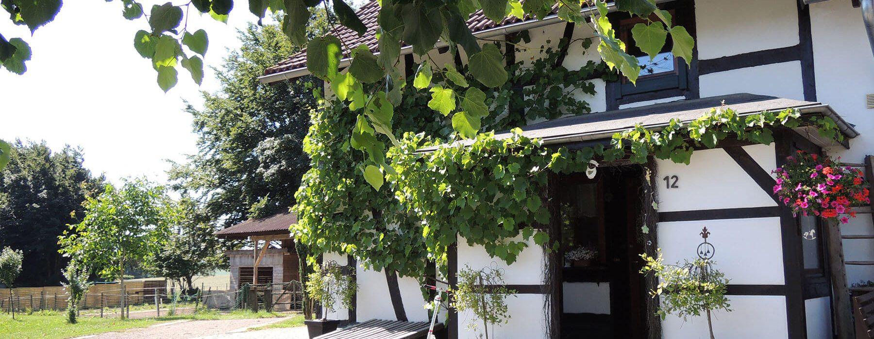 7M Immobilien – Außenaufnahme Haus mit Grundstück